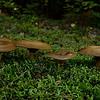 'Shrooms at Sugarloaf Campground.