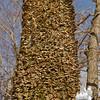 Mushroom covered tree-trunk.