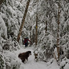 A couple of inches on the trail.