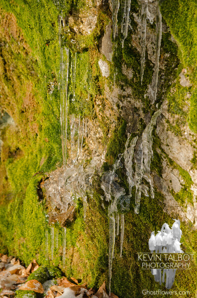 Moss and icicles.