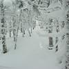Snow encrusted trees 2.