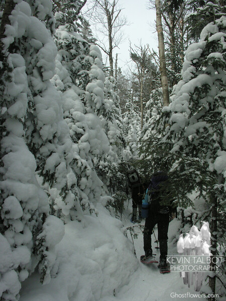 As we hike further up the trees are covered in new snow.