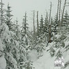 Beautiful woods, very steep trail.