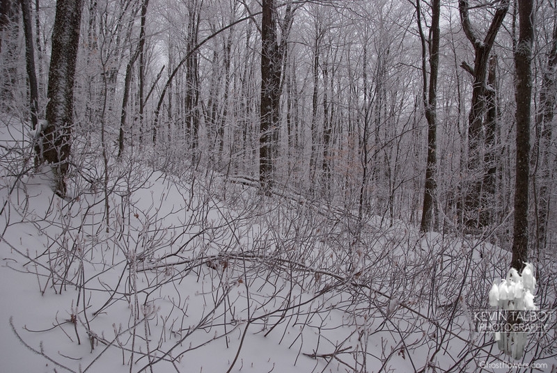 The trail rises through the naked deciduous forest.