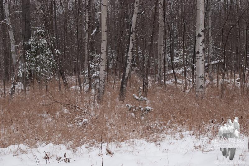 A winter scene as we begin the hike.