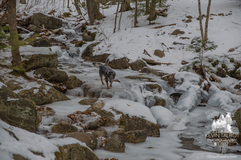 Blue leads across the brook...