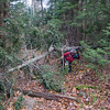 Many uprooted trees along 19 Mile Brook Trail from wind the night before...