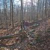 Open woods on the Wonalancet Range Trail.