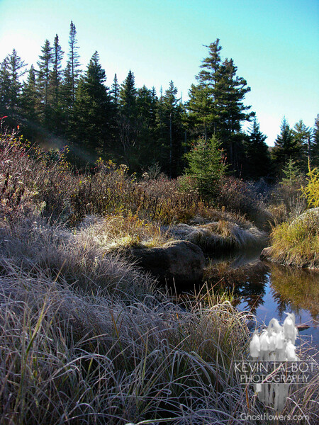 Thick frost in the low wetlands along the Zealand Trail.