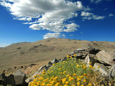 This is a great view of the road to the High Altitude Research Center (run by UCSD), the sky, clouds and our favorite mountain flower (I believe it's called Rabbitbrush).