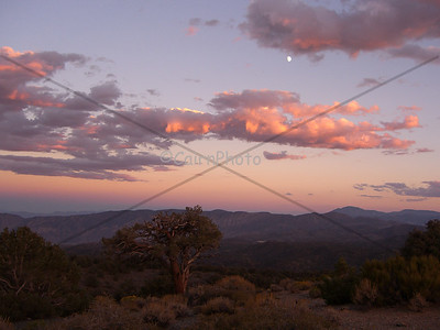 Looking at the pink, sunset sky to the east of the White Mountains, California.