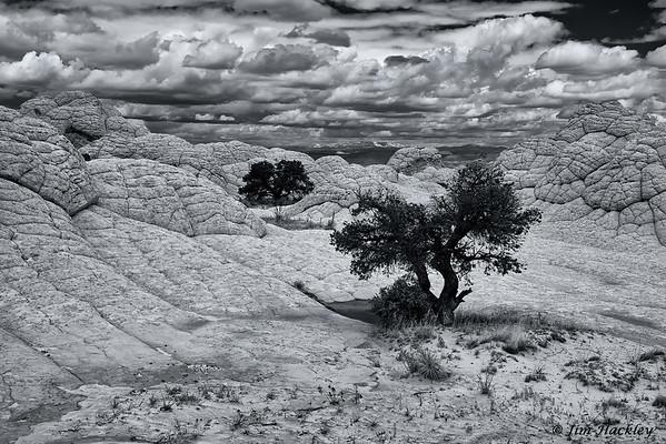 Sandstone Trees