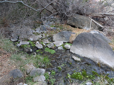 Pajarito Springs provides water for exuberant vegetation in an arid land.