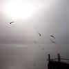 Seagull Dance