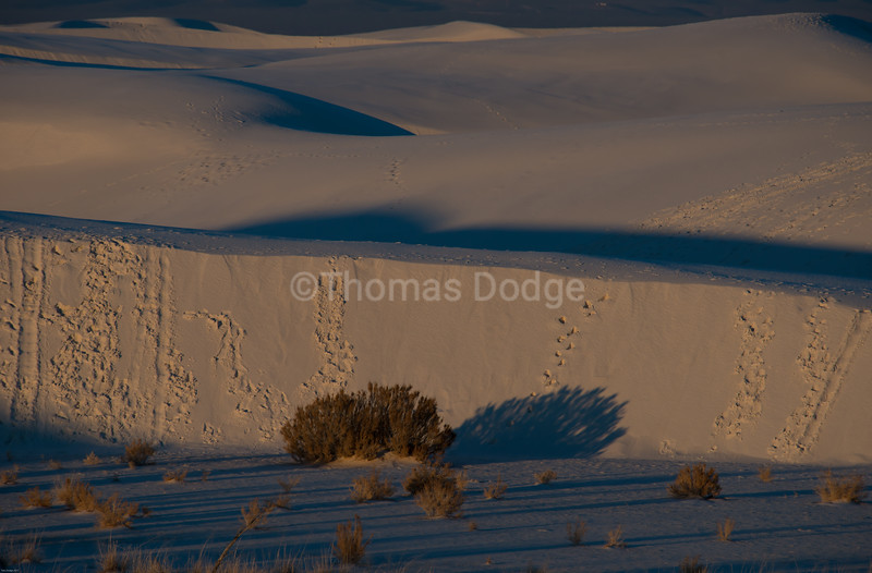 """White Sands, Big Skies—5"
