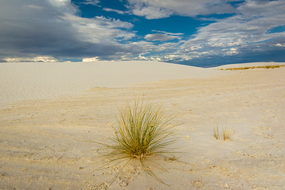 White Sands with Isolated plant.