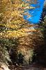 golden fall road