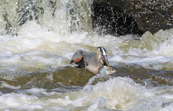 James River/Pipeline 5-26-2013