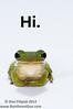 Hi.  Green Treefrog (<I>Hyla cinera</i>)