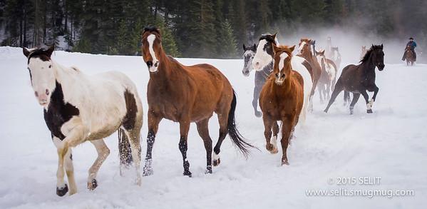 Whitefish Horse Round Up
