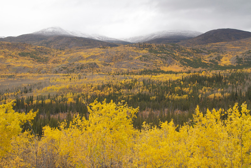 Along the beautiful Klondike Highway between Whitehorse and Dawson.