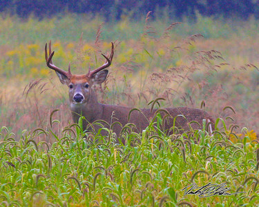 Big Buck on a rainy day.