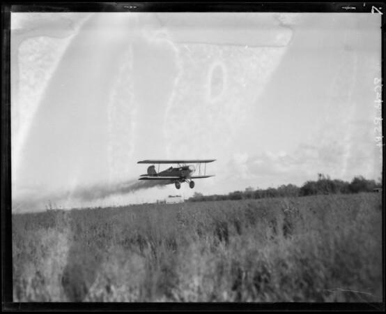 Dusting via airplane, Pacific Aero Dusting Co., Southern California, 1929