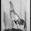 Vase and silver rooster at home of Mr. Thackleden, 2000 North Van Ness Avenue, Los Angeles, CA, 1931