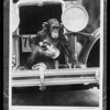 Monkey composite, Southern California, 1931