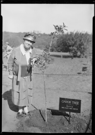 Planting tree by Mrs. Alice Ames Winter's Club women, Southern California, 1928