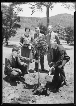 Orange tree planted, California Botanic Garden, Southern California, 1928