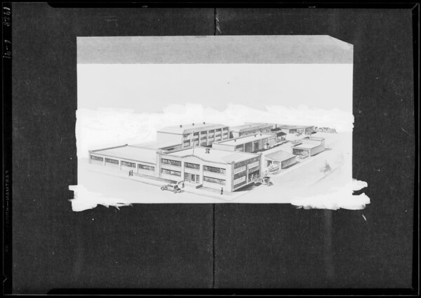 Copy of sketch of plant, Southern California, 1928