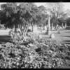 Flowers on Bradley grave at Rosedale, Los Angeles, CA, 1931