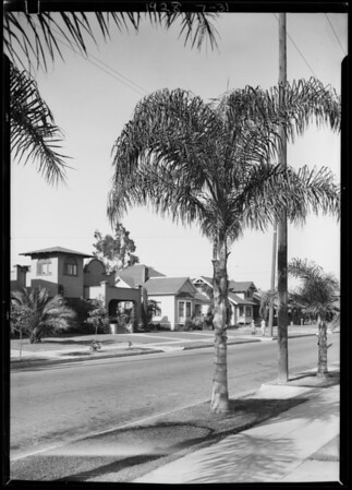 Palm tree for View Park, Los Angeles, CA, 1928