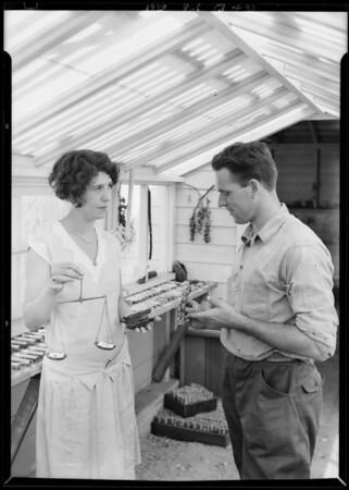Weighing a carob seed, Southern California, 1928
