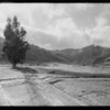 Pastoral scene near Newhall, Southern California, 1930