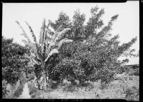Highland Hills subdivision, Southern California, 1925