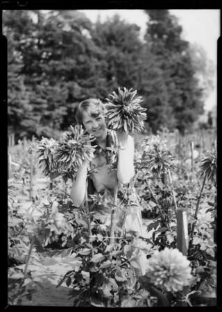 Hayes Dahlia Farm, Southern California, 1928