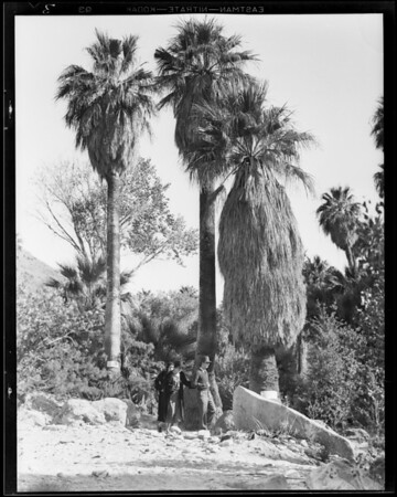 Scenes in Palm Canyon, Southern California, 1931