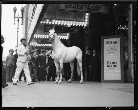 Kellogg's horse 'Jadaan' in 'Beau Ideal', Southern California, 1931