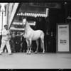 Kellogg's horse 'Jadaan' in 'Beau Ideal', Southern California, 1931
