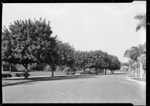 Trees, Forestry Division - Los Angeles City, Southern California, 1931