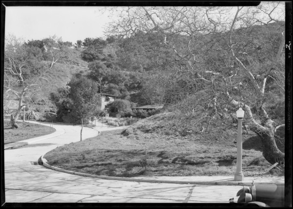 Tree scenes etc. around tract, Southern California, 1930