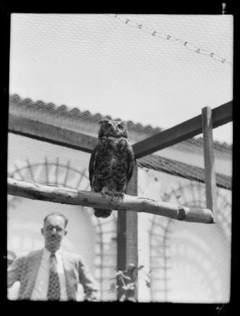 Birds at Catalina aviary, Southern California, 1929