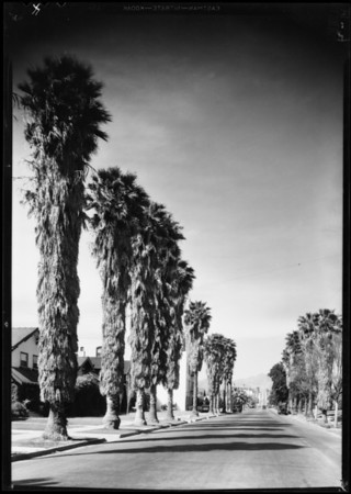 Street scenes with and without trees, Southern California, 1931