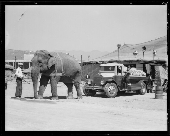 Elephant & oil truck, Southern California, 1931