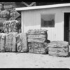 Bales of cotton, Southern California, 1929