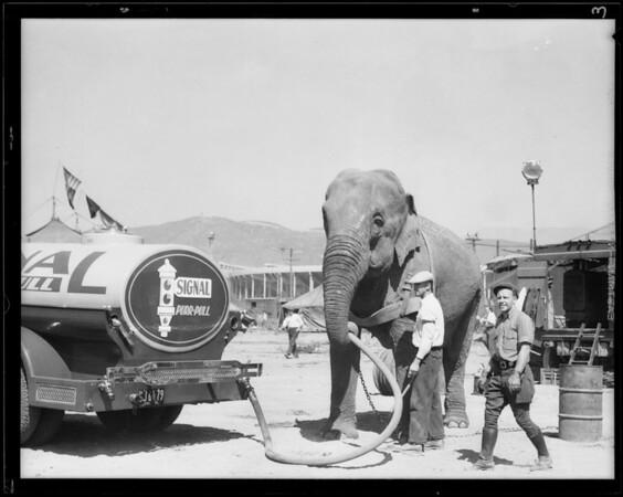 Elephant & oil truck, Southern California, 1931