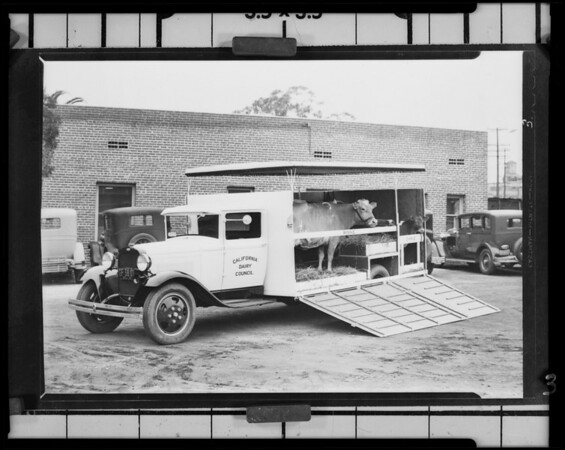 Cow truck, Southern California, 1931
