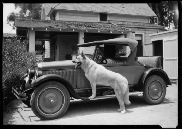 """ILAK"", The Big Dog, Southern California, 1926"